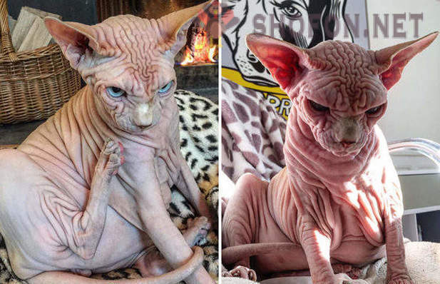 Slike golih djevojaka maca